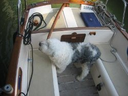 Old Sea Dog