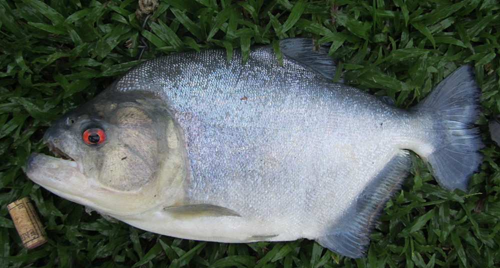 I caught this one evening on the river Mana...
